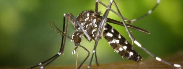 malaria993